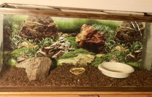 old glass turtle tank for Sale in Murrieta, CA