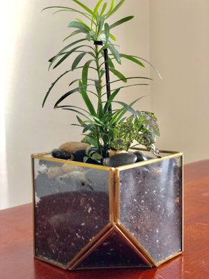 Tropical Plant Terrarium - Silver Spring (Pick Up Only) for Sale in Silver Spring, MD