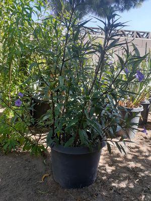 Plantas muy bonitas y grandes de 15 galones for Sale in Fontana, CA