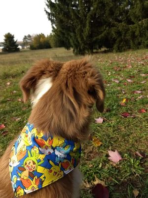 Pokemon Dog or Cat Over the Collar Bandana for Sale in Charlevoix, MI