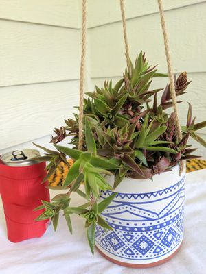 Red Pagoda Succulent Plants in Hanging Ceramic Planter Pot- Real Indoor House Plant for Sale in Auburn, WA