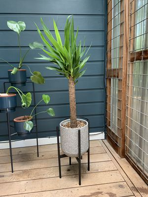Potted yucca with stand for Sale in Austin, TX