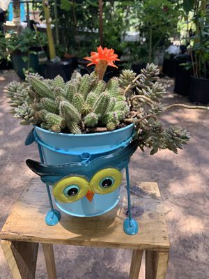 Succulent owl for Sale in San Antonio, TX