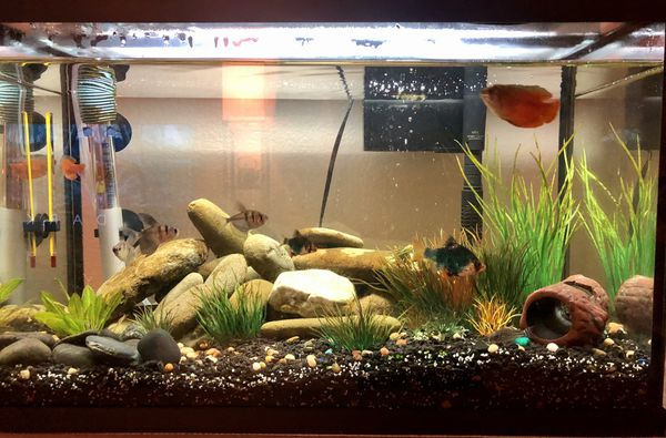 10 gallon fish tank with loads of accessories