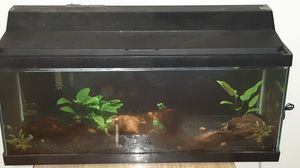20 gallon (long) fish tank for Sale in University Place, WA