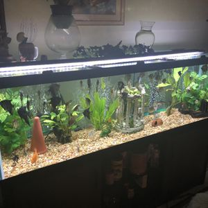 all glass aquarium for Sale in North Haven, CT