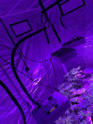 Grow tent with lights for Sale in North Las Vegas, NV