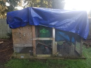 Chicken coop with three laying hens. for Sale in Bellevue, WA
