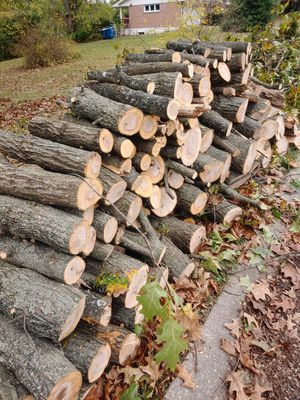 Free fire wood oak for Sale in Florissant, MO