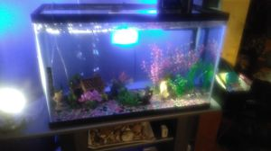 Fish, Fish tank, Filter and with Food and Cleaners for Sale in Garrison, MD