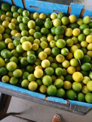 Limon Mexicana De Venta!! Mexican Limes for Sale!! for Sale in Romoland, CA