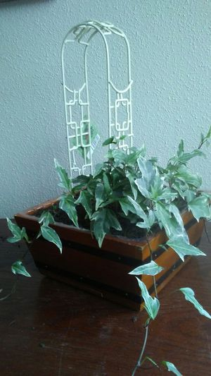 New Miniature Fairy Gardening Arbor in Creme for Sale in Colorado Springs, CO