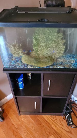 Aquarium 10 gallon with top, filter, stand and Salt water fish for Sale in Florissant, MO