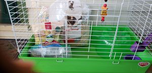 Guinea Pig Cage and Accessories for Sale in NEW SALEM BRO, PA