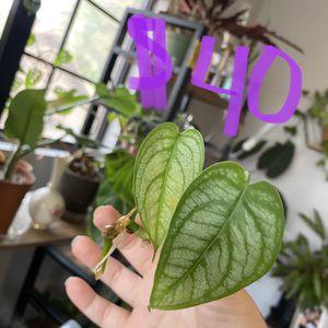 Plants! for Sale in Chandler, AZ