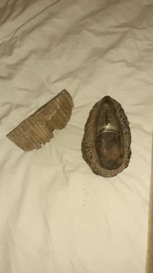 Fossils for Sale in Port Richey, FL