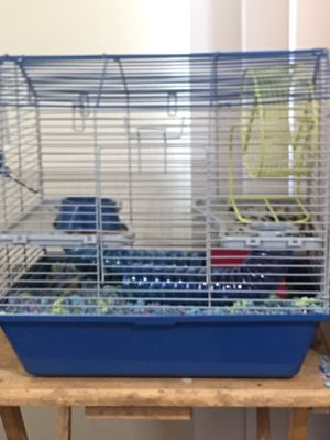 Hamster and cage for Sale in Long Beach, CA