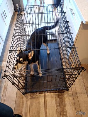 Dog crate/kennel/cage for Sale in Summit, IL