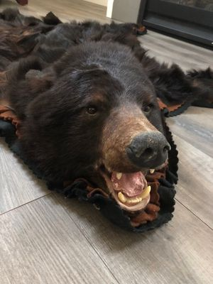 Black Bear Rug Trade for woodworking tools for Sale in Bend, OR