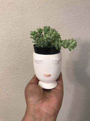 donkey tail succulent plant head planter pot for Sale in Grand Prairie, TX