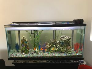 Fresh Water Fish Tank Everything Included for Sale in Palm Springs, CA