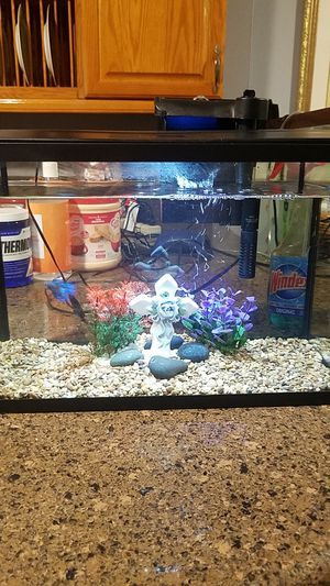 5.5 gallons fish tank with hard top hood come with LED light, in excellent condition , complete set up ready for you to take home. for Sale in Long Beach, CA