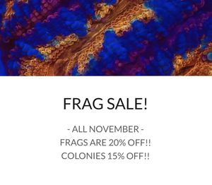 Frag & Coral Sale! for Sale in Los Angeles, CA