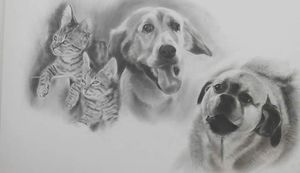 Pet portrait for Sale in Concord, CA