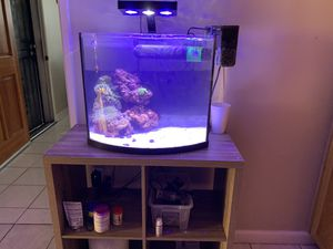 Saltwater nano reef tank aquarium with stand for Sale in Los Angeles, CA