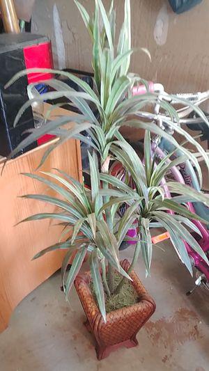 Plant for Sale in Salt Lake City, UT
