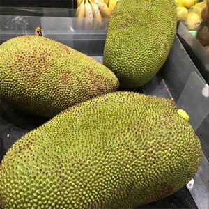 Jackfruit for Sale in Miami, FL