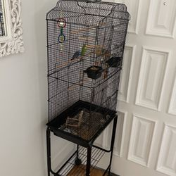 Budgies For Sale With Cage And Accessories for Sale in Glendale,  CA