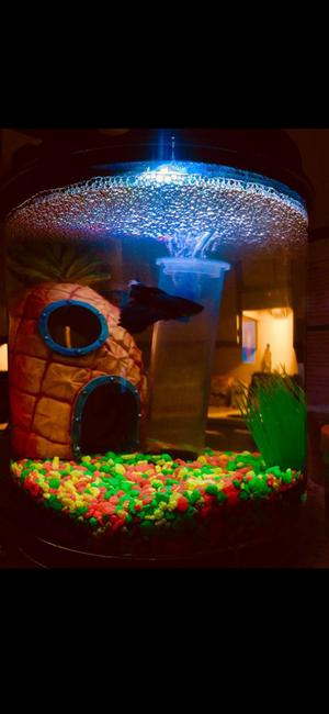 Imagitarium Freshwater Aquarium Fish tank for Sale in Manassas, VA