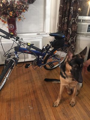 Lock-N-Roll bike Folding bicycle for Sale in Chicago, IL