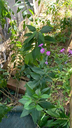 Free plants for Sale in Lexington, KY