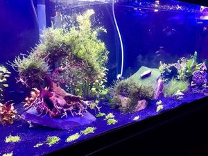 75 Gallon Aquarium Set Up EVERYTHING INCLUDED! for Sale in Lima, OH