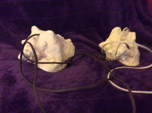 2 conch shell lamps for Sale in Downingtown, PA