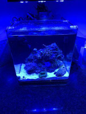 Saltwater aquarium for Sale in Los Angeles, CA
