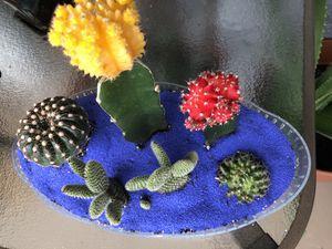 Exotic cactus succulent arrangements for Sale in Hialeah, FL