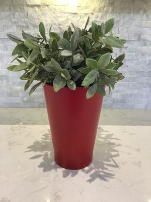 Artificial plant for Sale in Miramar, FL