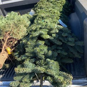 Christmas Tree for Sale in Bakersfield, CA