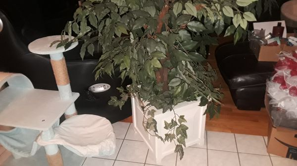 Artificial plant in white wooded pot