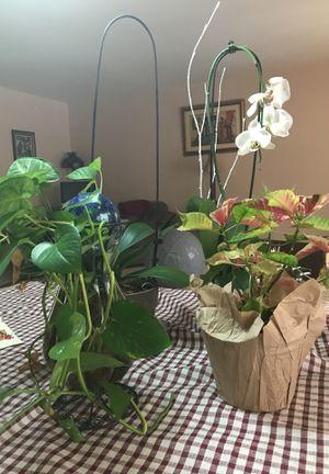 Household plants for Sale in Woodbridge, VA