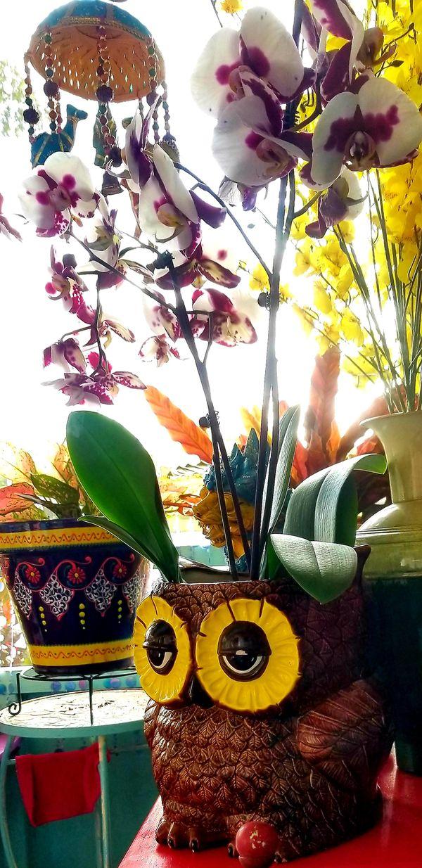 Double Face Ceramic Owl Planter/Vase
