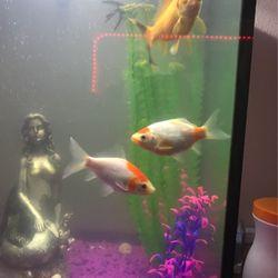 Gold Fish for Sale in Stockton,  CA