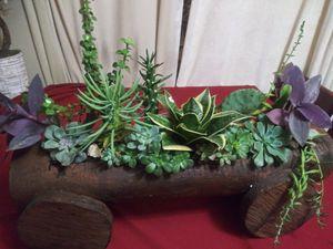 Succulents en carreta grande for Sale in South Gate, CA