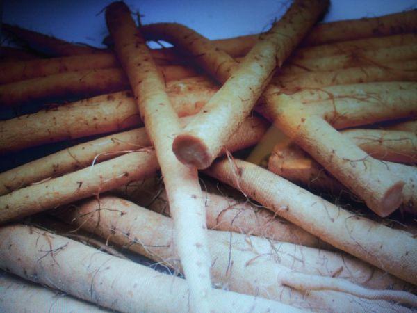 Fresh Burdock Root
