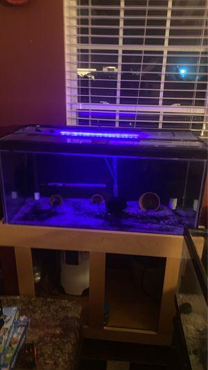 50 gallon fish tank (37x18x16) for Sale in Katy, TX