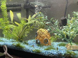 Aquarium for Sale in Austin,  TX
