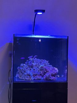 50 Gallon Rimless Fish Tank Aquarium for Sale in San Dimas,  CA